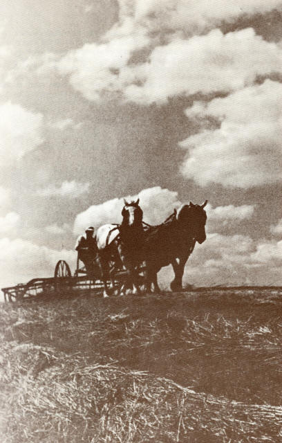 Frank O. Berry Raking Hay On The Home Place